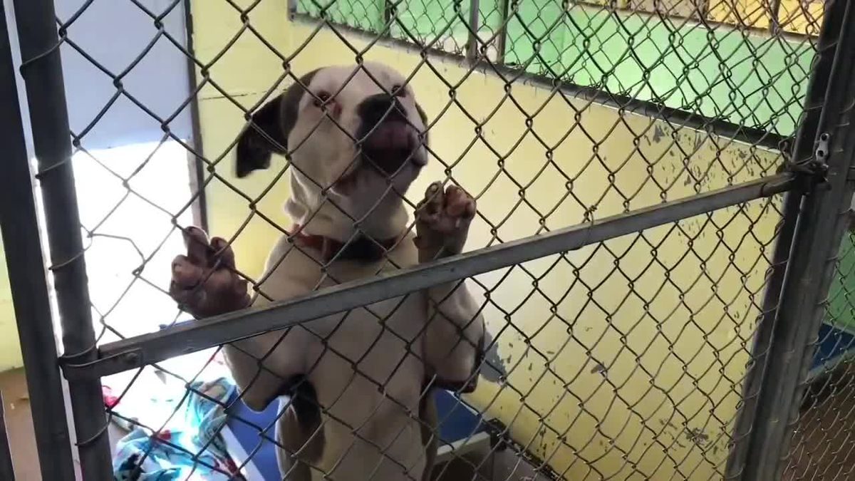 Chesterfield animal shelter reports increased save rate, over 650 adoptions during 2020