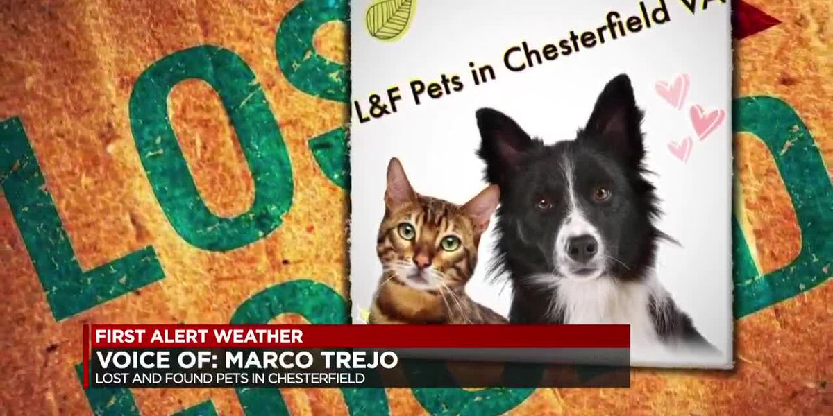 Pets missing after snow storm