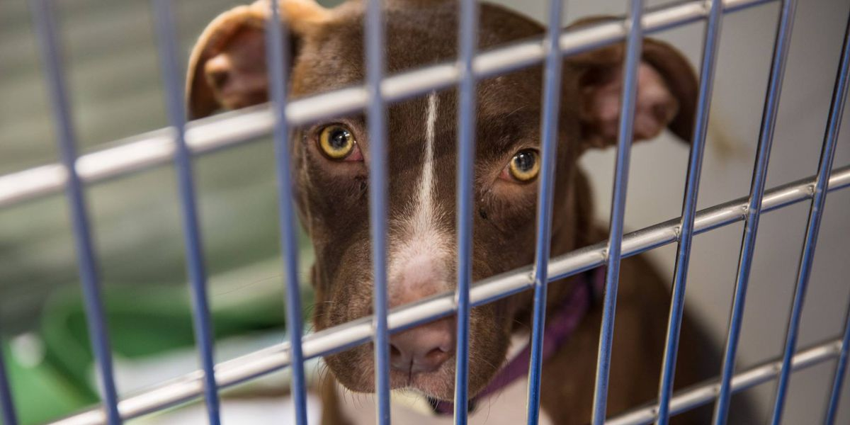 Charlottesville shelter takes 70 animals from Houston