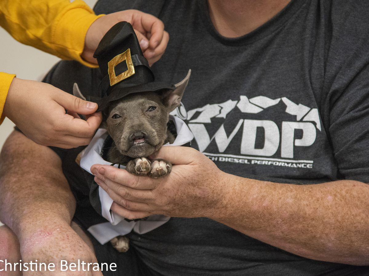 Dog born without nose given chance for recovery