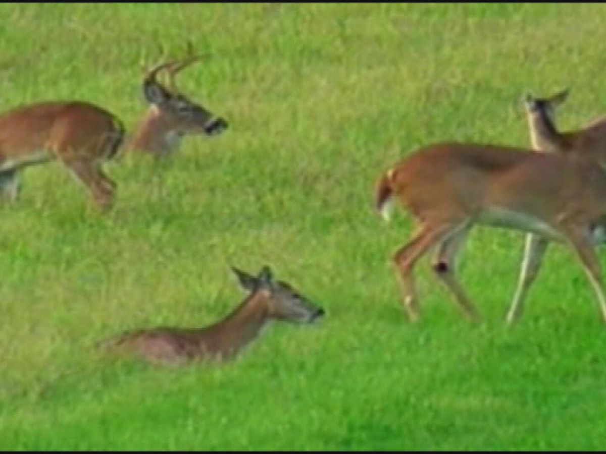 Deer mating season forces drivers to pay extra attention