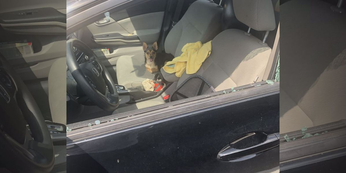 Men bust window of hot car parked in Va. shopping center to rescue dog