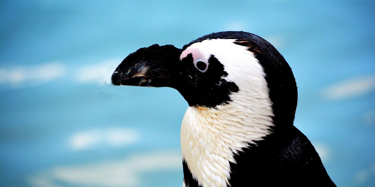 Penguin at Metro Richmond Zoo is oldest in U.S.