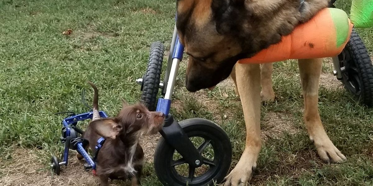 Disabled animals calendar to feature dogs from Virginia