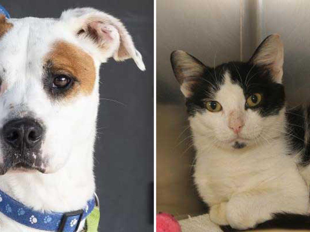 SPCA waives pet adoption fees through Saturday