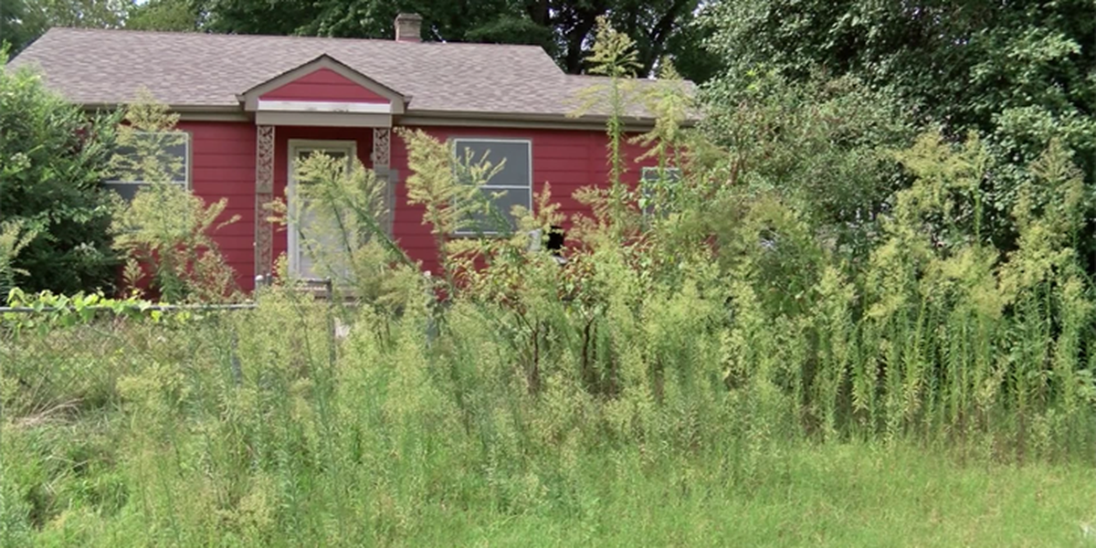 On Your Side: Getting answers for man with tall grass complaint