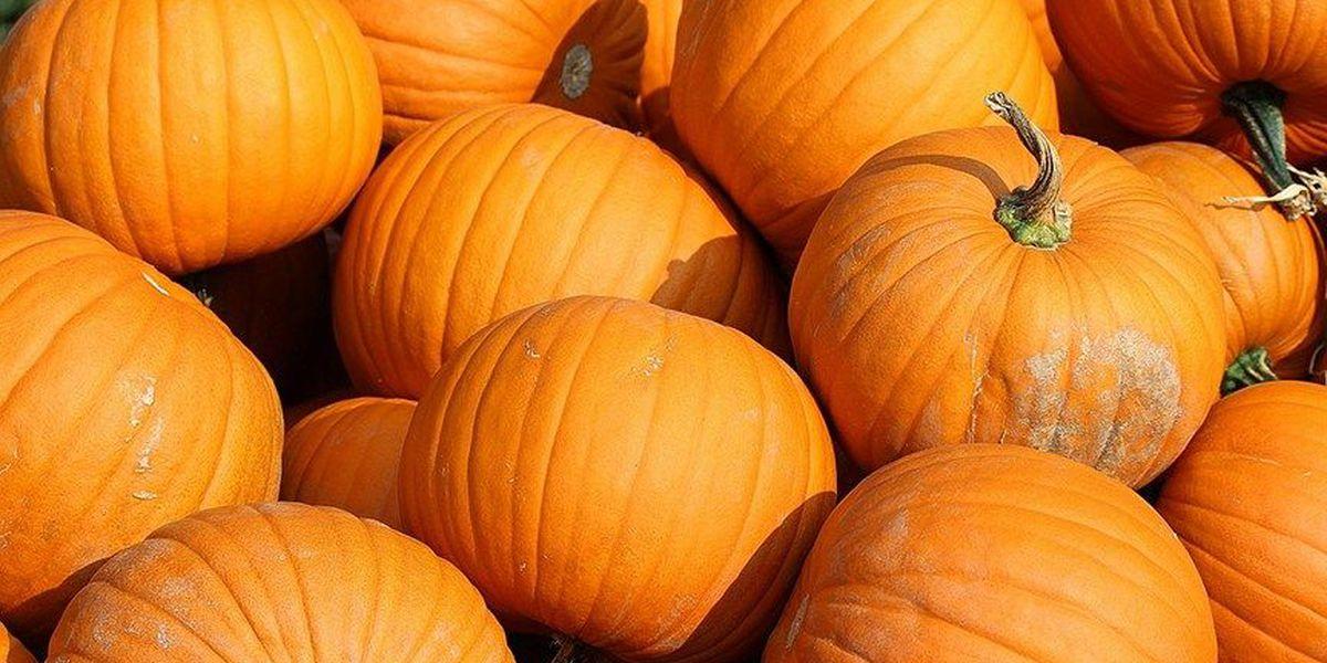 VA brewery cancels pumpkin beer dump after complaints