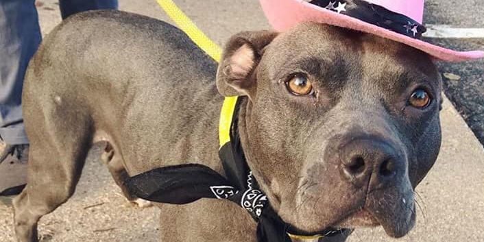RACC waives adoption fees Sunday for those in Halloween costumes