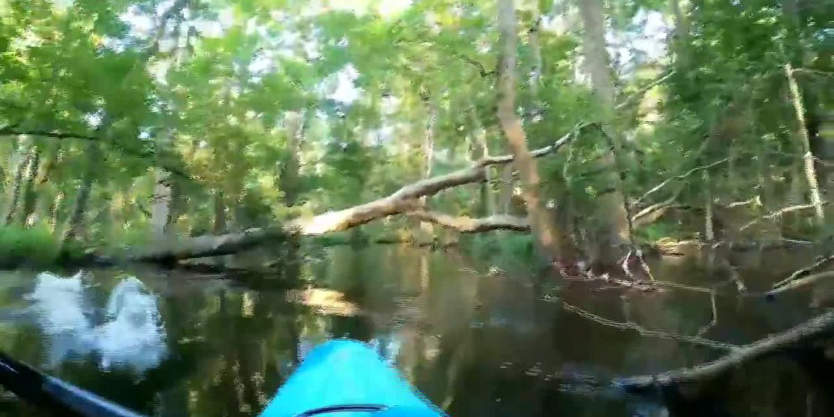Kayaker has close encounter with an alligator on N.C. river
