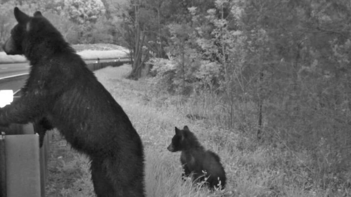 With wildlife corridor plan, Virginia officials hope to reduce highway collisions with animals