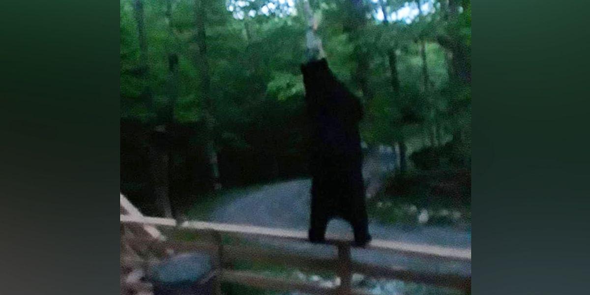 Virginia family captures photos of bear circling home