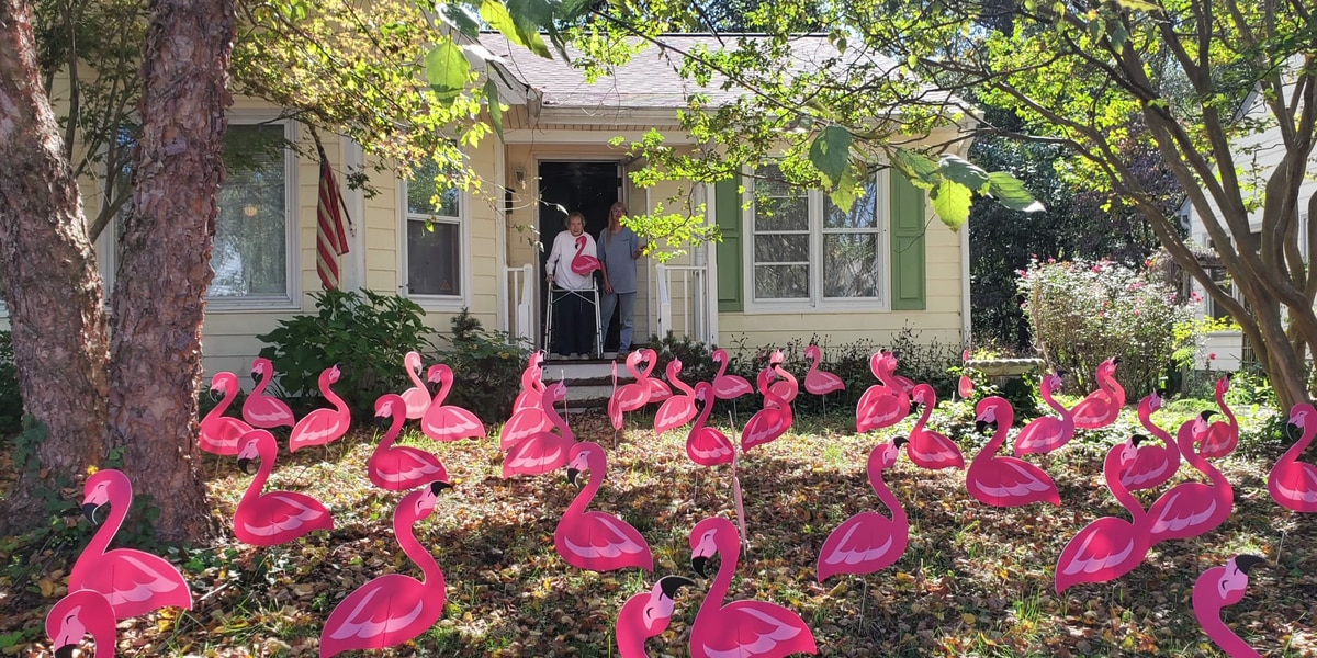 Neighbors surprise woman with 100 flamingos for her 100th birthday