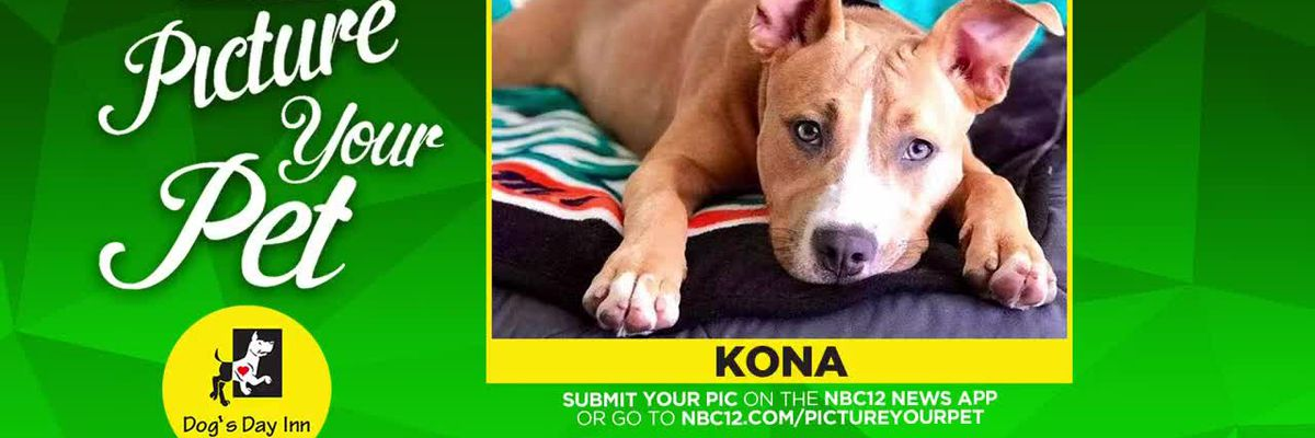 Picture your pet - Kona