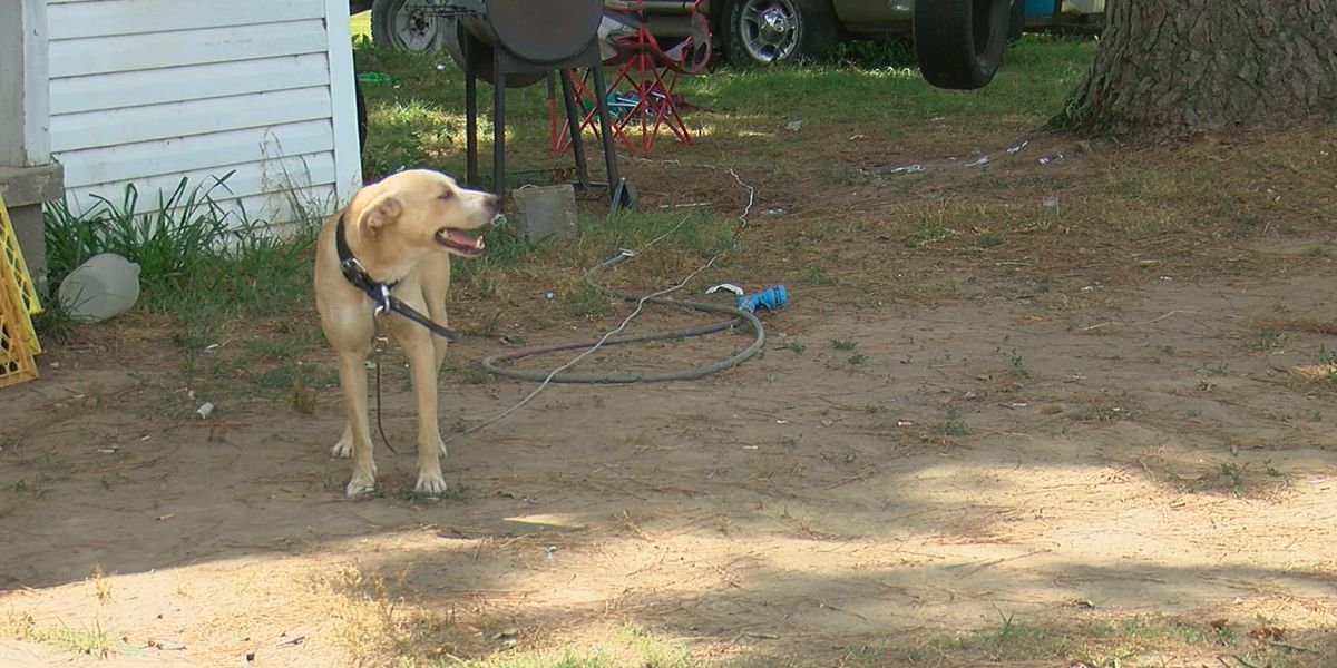 Reminder: New animal cruelty laws ban tethering in extreme heat