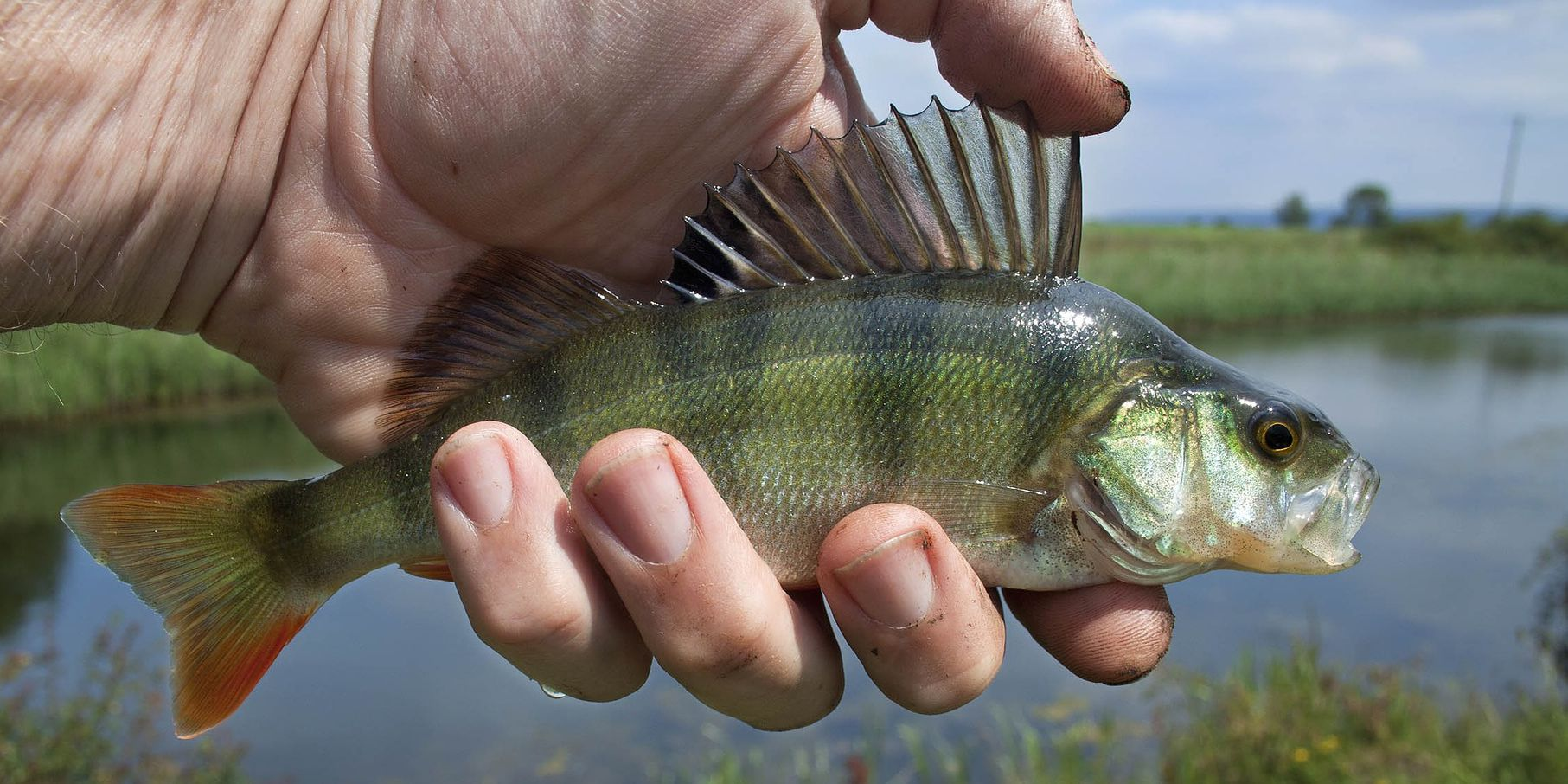 Virginia free fishing days scheduled for June 7-9