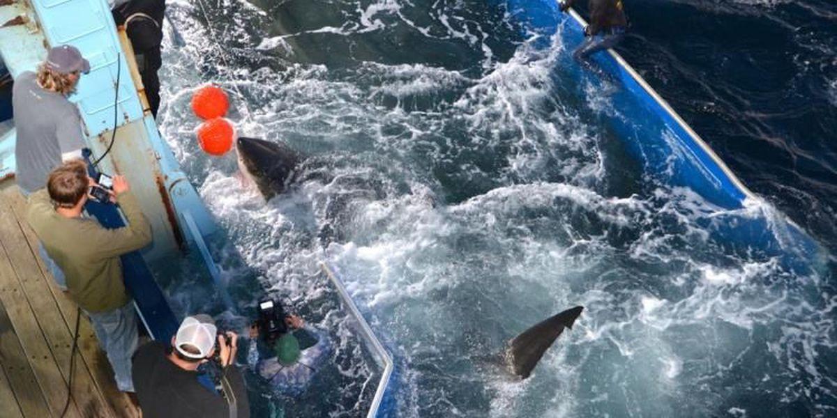16-foot shark swims close to N.C. coastline
