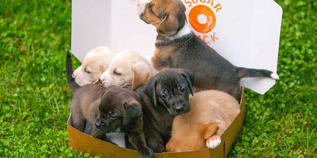 Meet the NBC12 Pet Cam pups