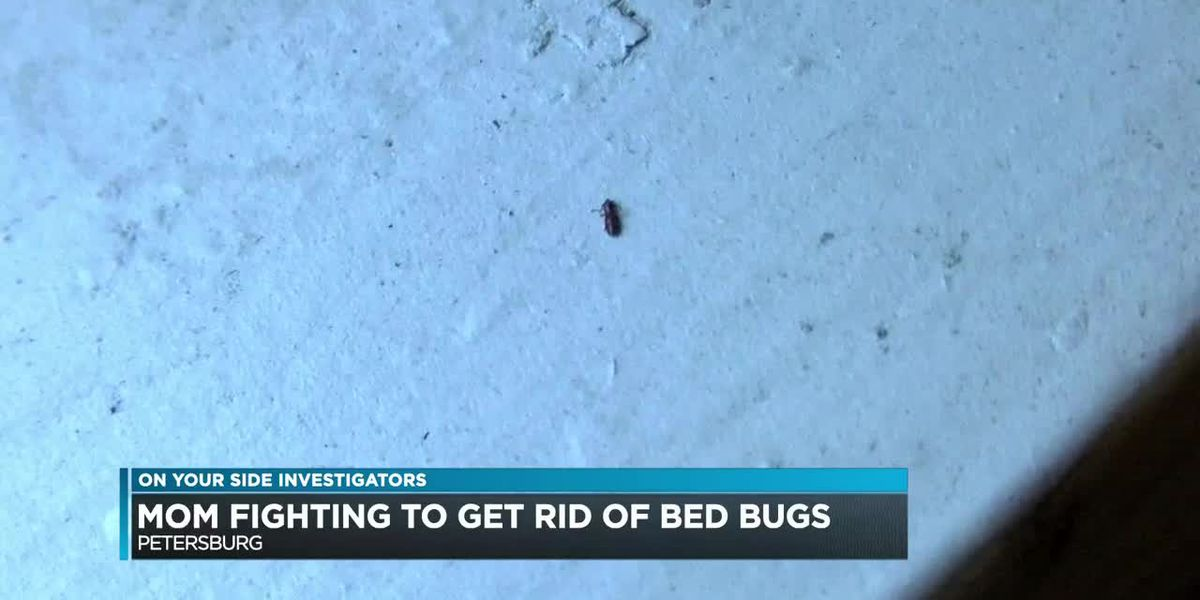 Mom fighting to get rid of bed bugs