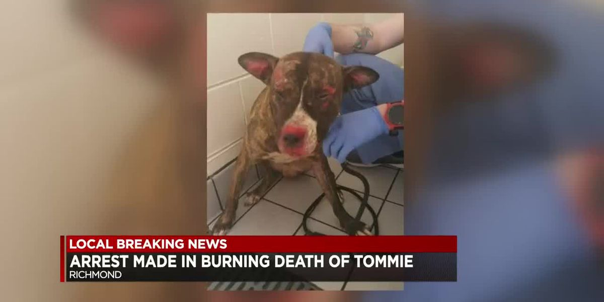 Man charged in death of beloved dog Tommie