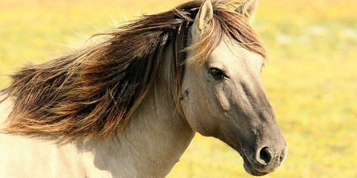 Virginia horse tests positive for West Nile