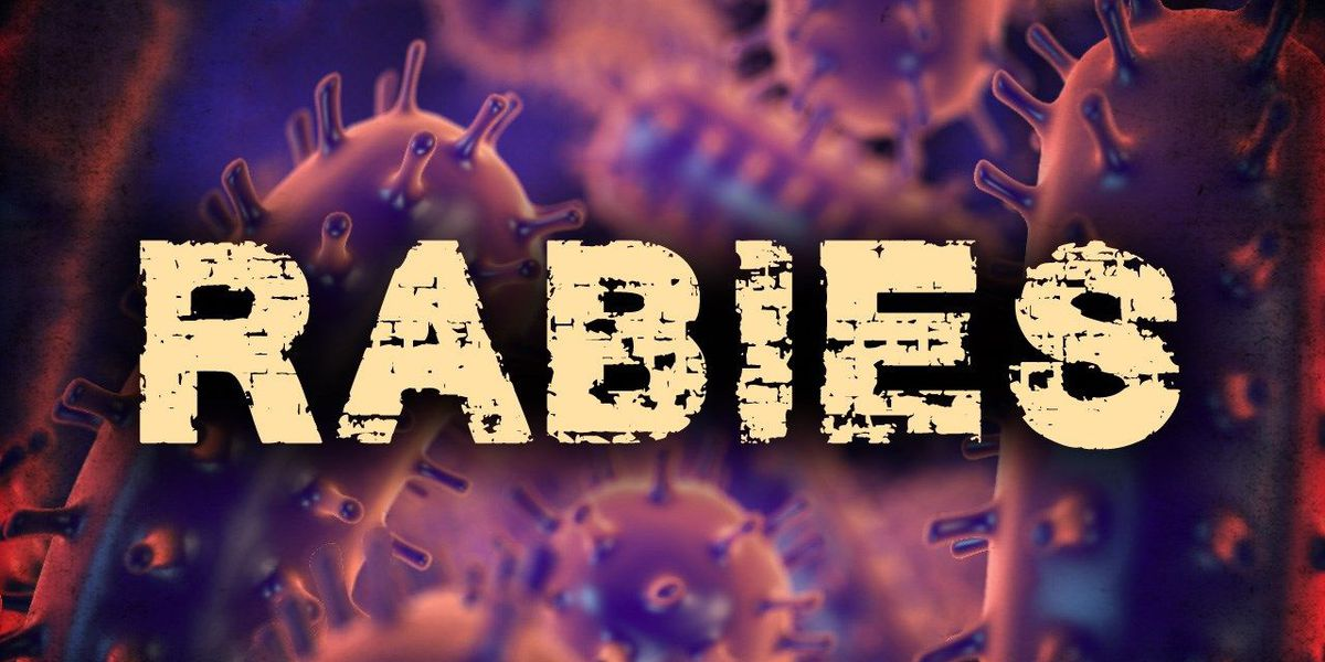 Third positive rabies case confirmed in Henrico