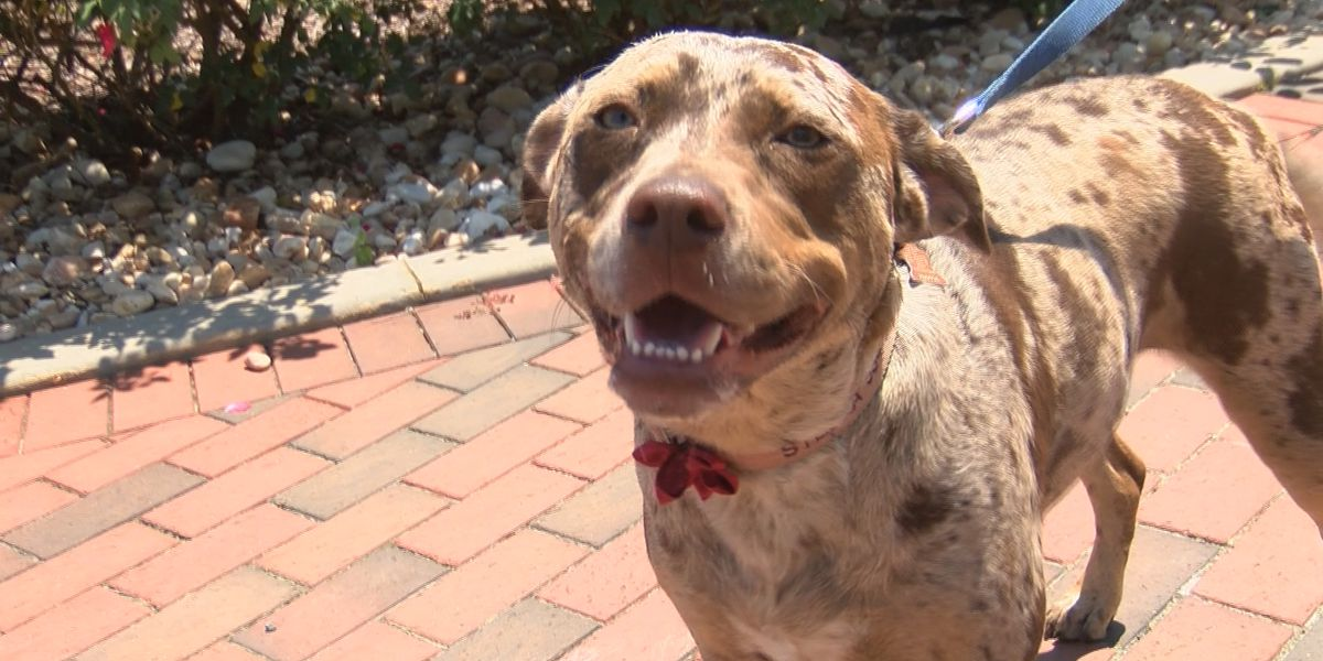 Preventing heat-related illness in dogs
