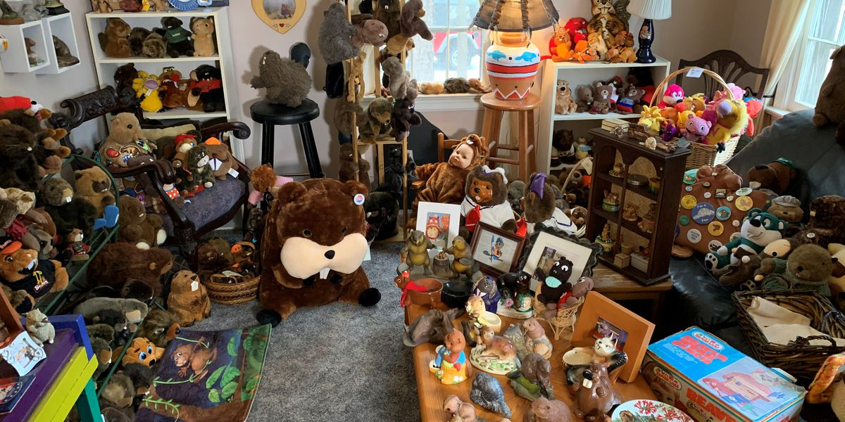 Chesterfield woman hopes to break Guinness World Record with her beaver collection