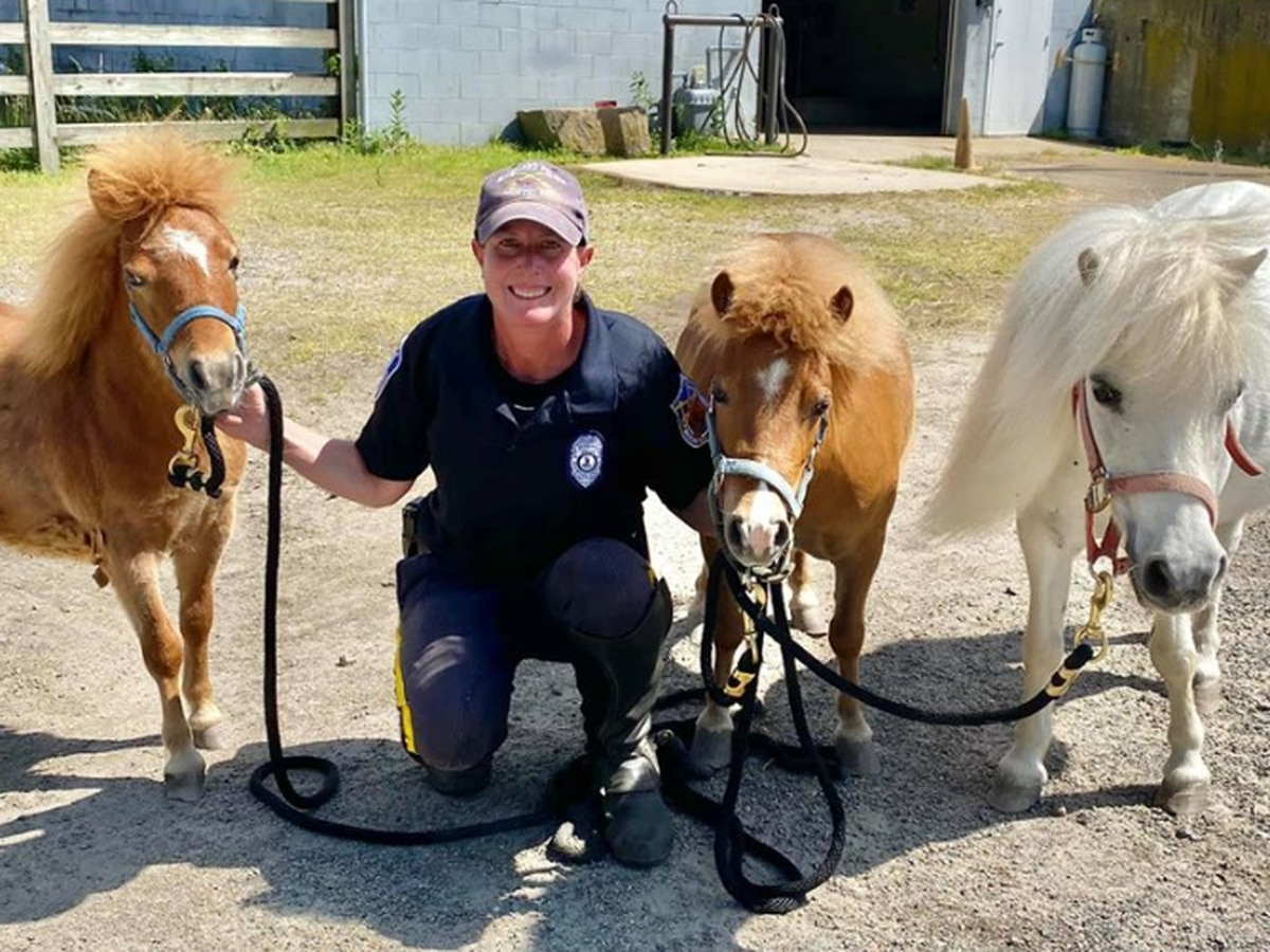 3 miniature horses found living in backyard in Richmond find home in Hanover
