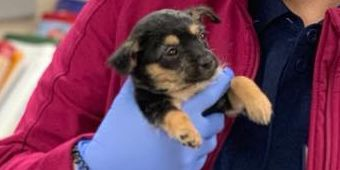 4-week-old puppy that can't walk gets MRI results
