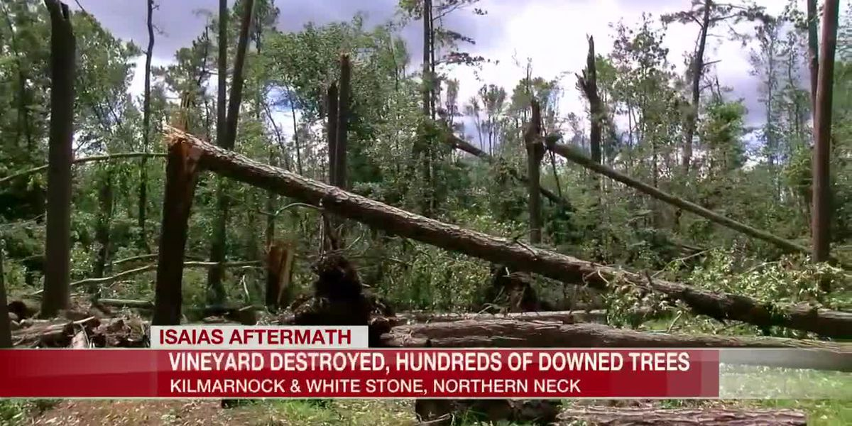 Vineyard destroyed, hundreds of downed trees