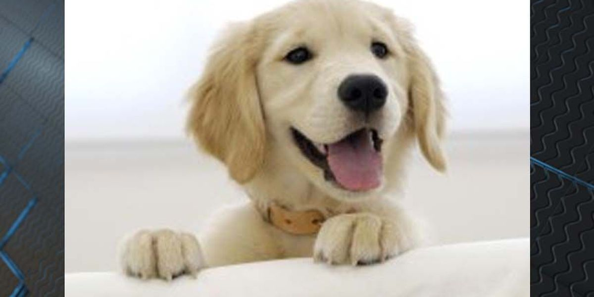 Pet lifetime license bill passes in General Assembly