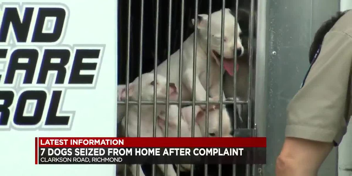 RACC seizes 7 dogs in animal neglect investigation
