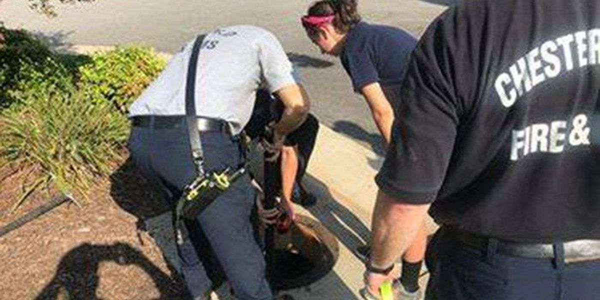 Chesterfield fire rescue dog from storm drain