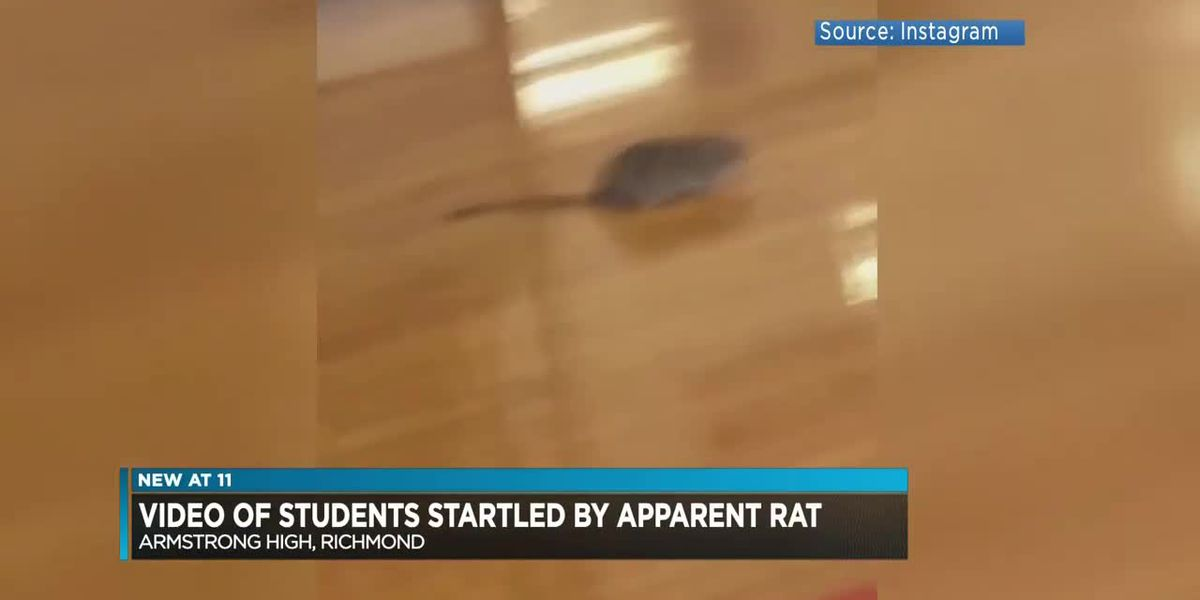 Rat video angers Richmond students, parents