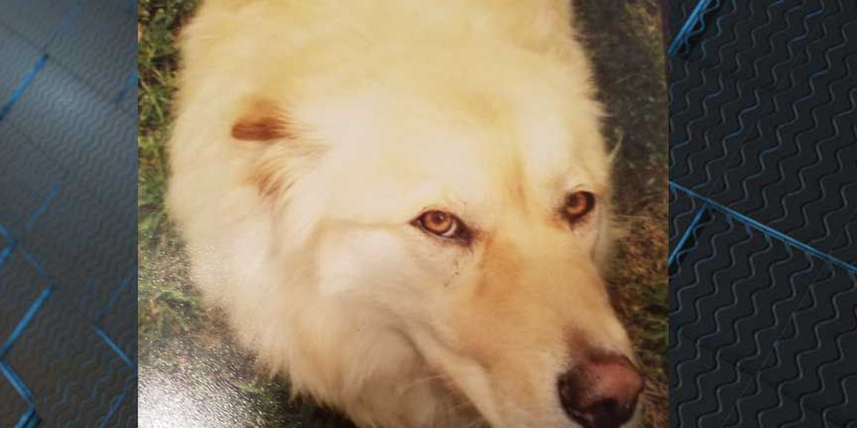 Blind dog stolen from Dinwiddie animal sanctuary