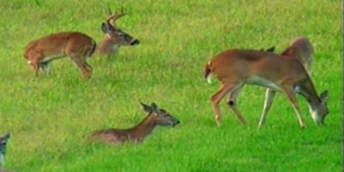VA ranks 11th when it comes to deer crashes