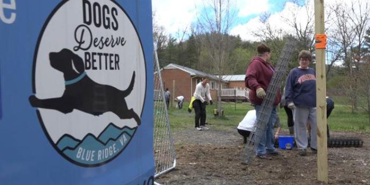 Unleashed: Group helps dogs gain more freedom
