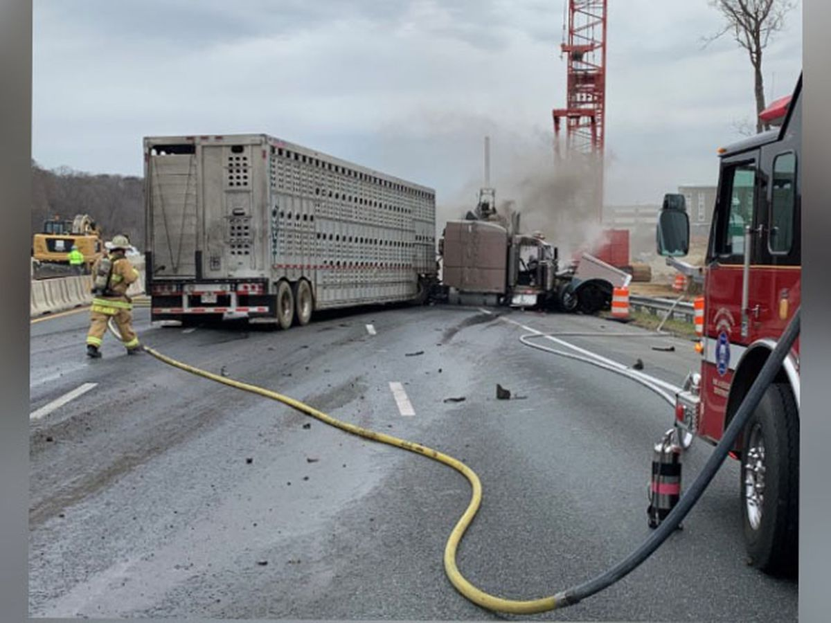 Tractor-trailer hauling pigs crashes on I-95, catches fire