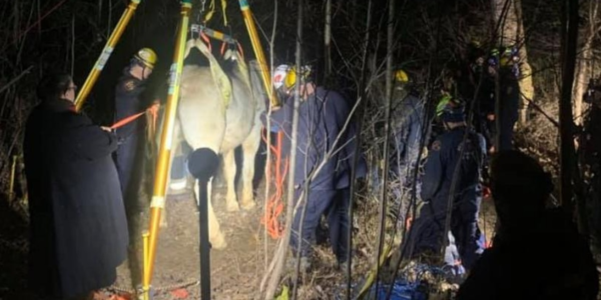 Horse that fell down embankment okay after five-hour rescue