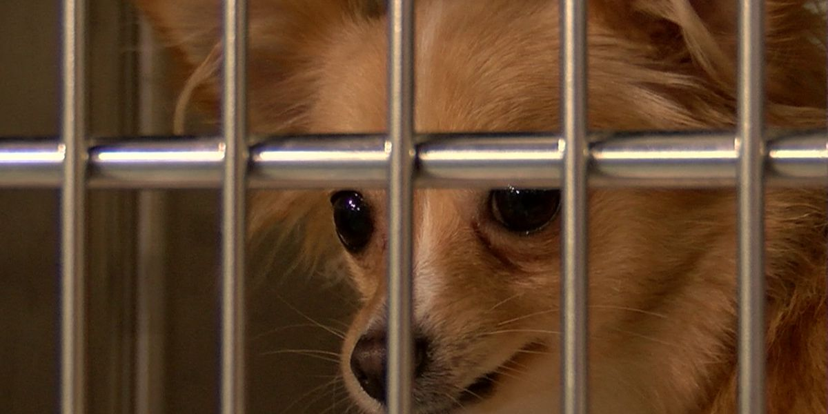 Richmond animal shelters take in animals displaced from Hurricane Florence