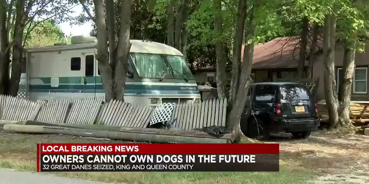 Owners of seized great Danes not allowed to own dogs