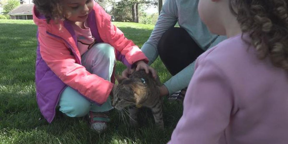 Cat rescued after almost 24 hours in tree