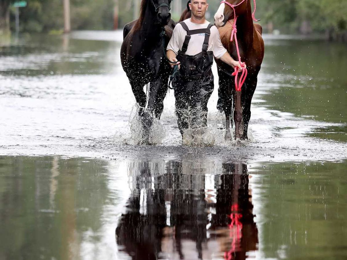 'Hurricane Cowboy' from Henrico wrangles in horses, livestock stranded in high waters left from Florence