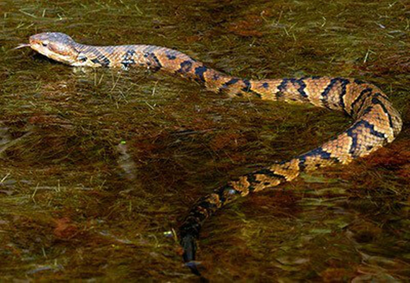 Snakes in Virginia: Meet 6 you'll mostly likely see this season