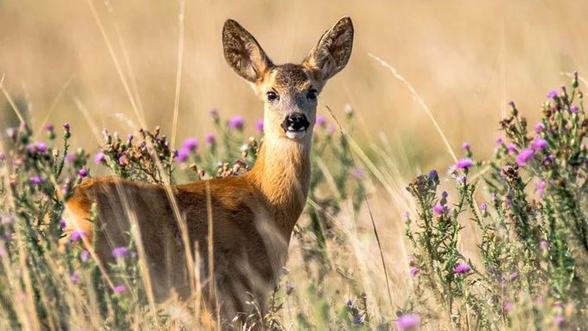 Wild animals are not pets, Va.'s wildlife resources reminds