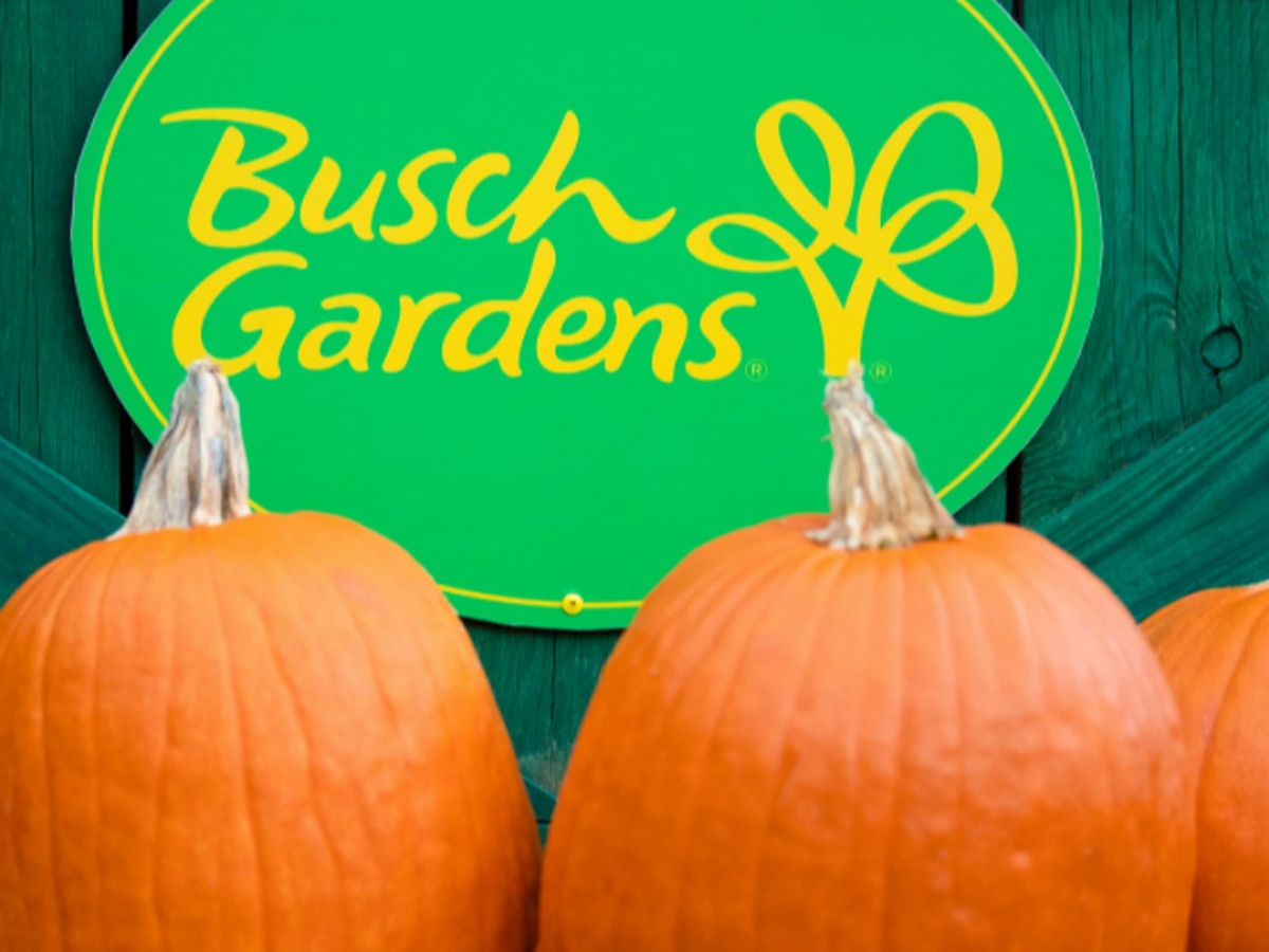 Busch Gardens hosting Halloween event with limited capacity