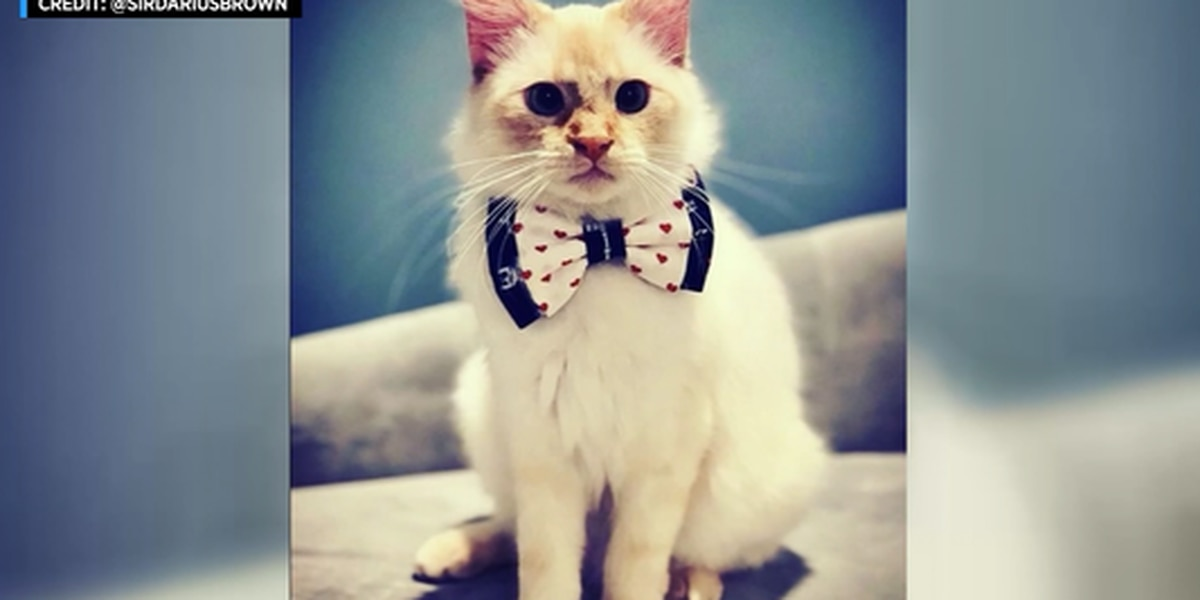A New Jersey teen's bow ties help pets get adopted