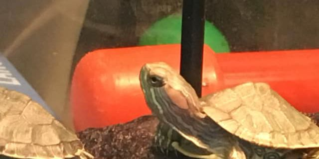 50 turtles seized from fast-food parking lot quickly adopted