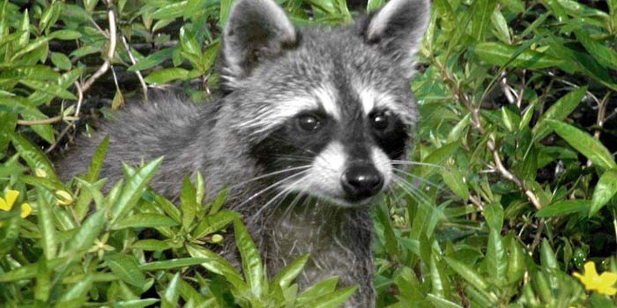 Fifth rabies case in Henrico confirmed