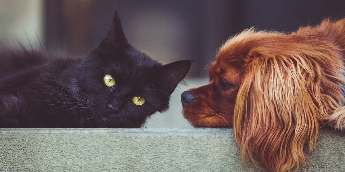 Henrico police to offer rabies vaccines for dogs, cats